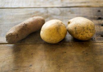 いろいろなジャガイモ
