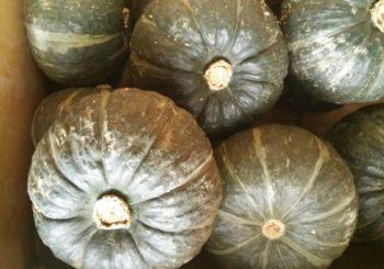 かぼちゃの旬