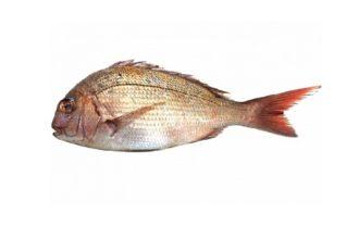 魚のうろこ