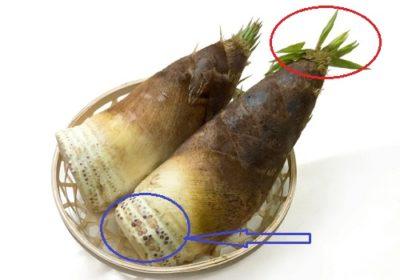 竹の子の選び方